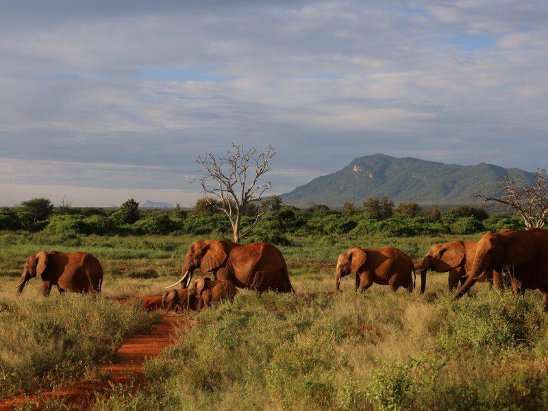 Национален парк Tsavo