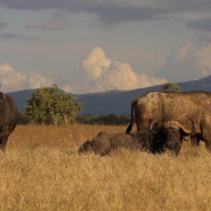 сафари африка